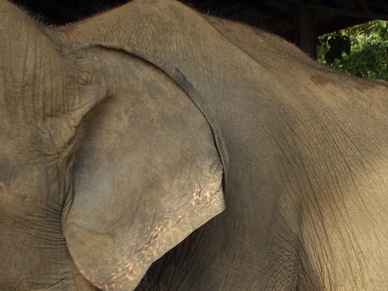 elephants11.jpg