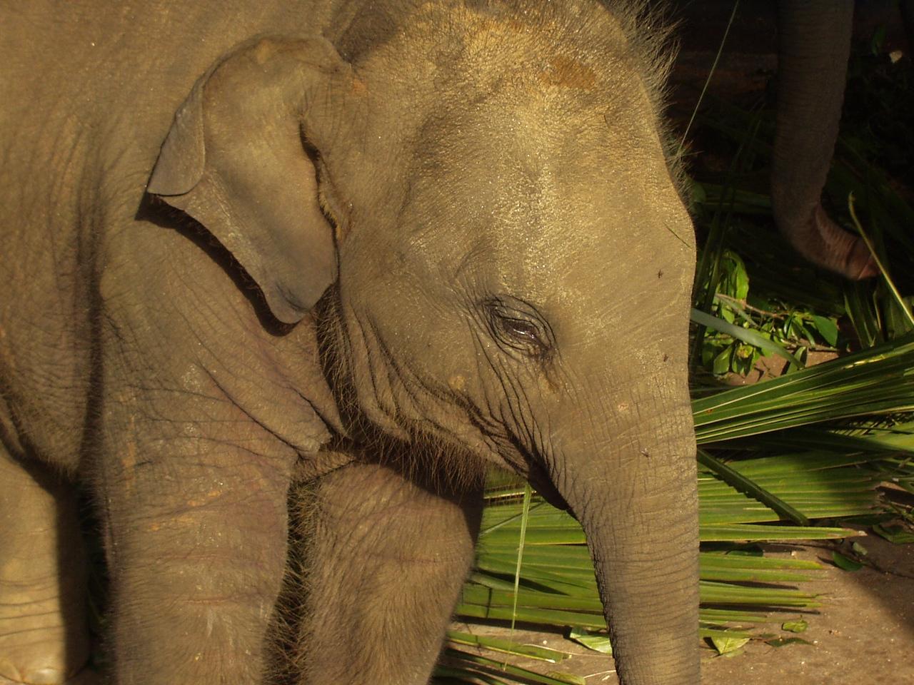 elephants07.jpg