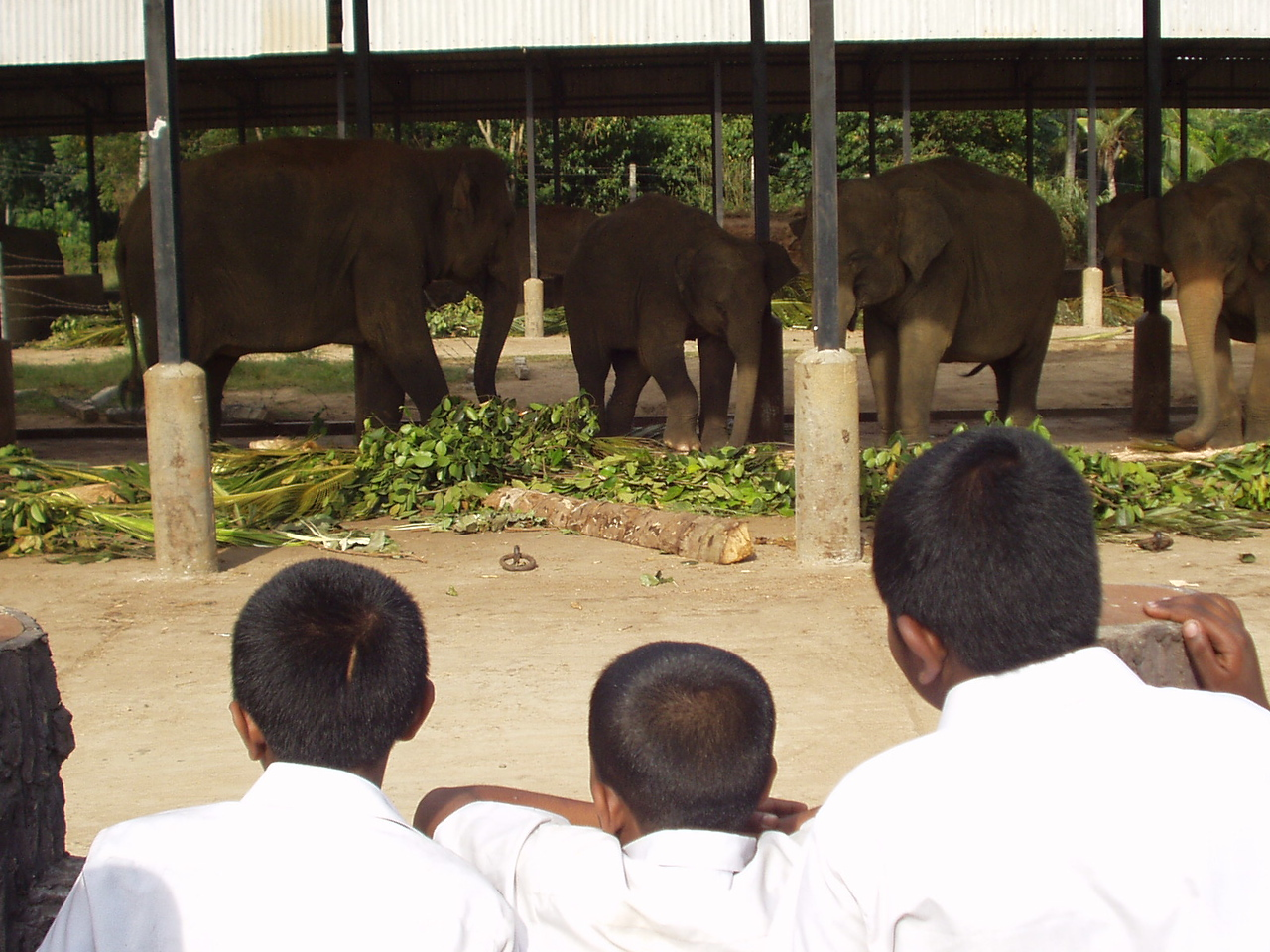 elephants02.jpg