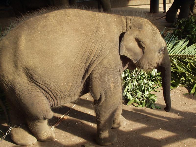 elephants06.jpg