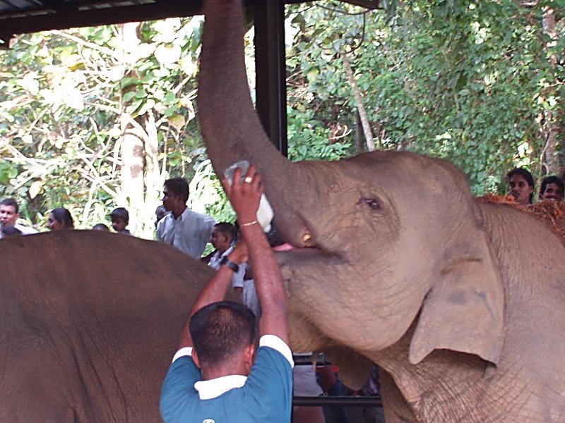 elephants10.jpg
