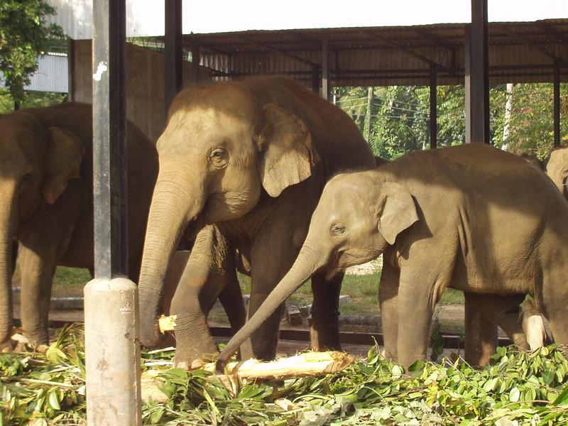 elephants04.jpg