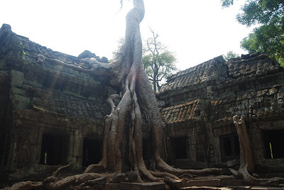Te Prohm temple.  This site is most known for the figgler trees that decided to grow right over the ruins