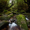 Yakushima's Mystical Forest