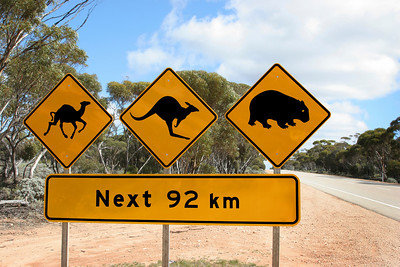 Warning sings for a camel, kangaroo and a wombat in the Australian Outback