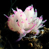 Unidentia sandramillenae