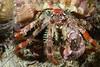 160404_Crab