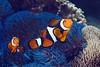 181121_Fish5a
