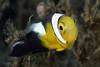 181115_Nemo