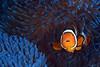 181121_Fish5c