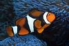 181121_Fish5e