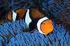 181121_Fish5f