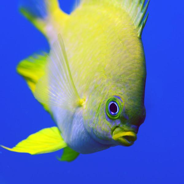181126_Fish3a