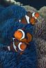 181121_Fish5b