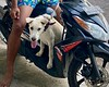 Nala onboard for a ride with Odi