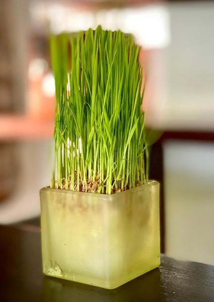 Rice plant center piece
