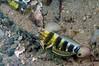 Lizard_120930_06