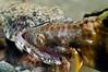 Lizard_120930_03