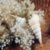 Snails_120922