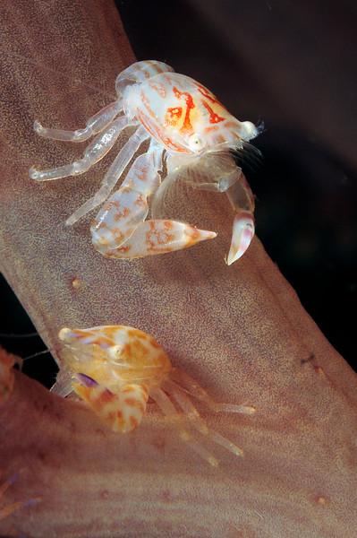 Crab_120930c