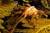 Crab_120928