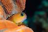 Fish_120924b