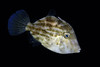 191205_Fish