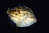 191205_Fish9c