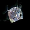 191207_Fish1b