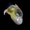 191206_Fish2