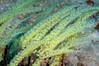 Tunicates_091212