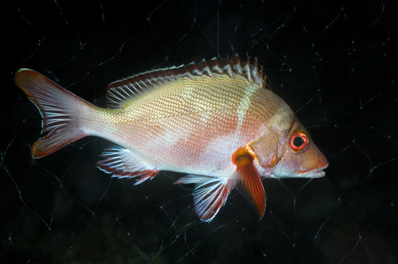 FishInNet_091211