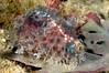 Snail_091214b