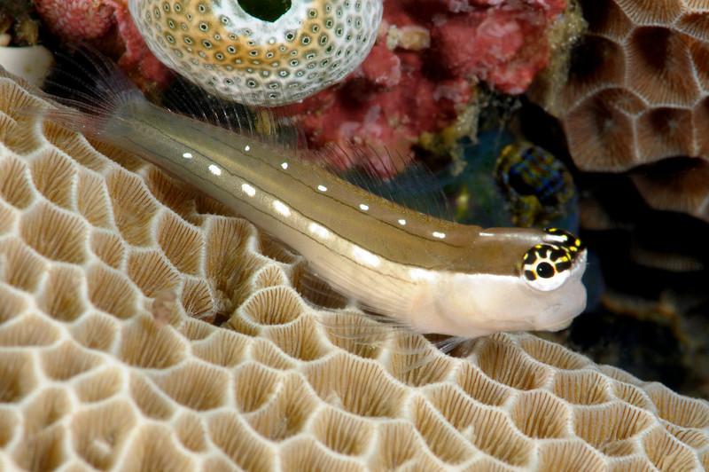 Fish_091216b