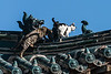 Cats on the roof of the Vajradhara Temple