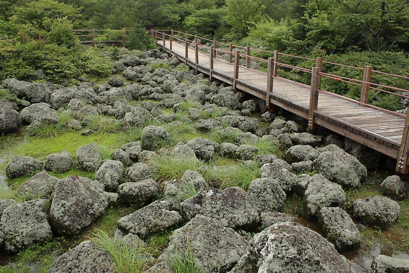 Volcanic rock atop Jeju Island, Korea