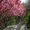 Walkway on Apsan Mountain in Daegu, Korea.