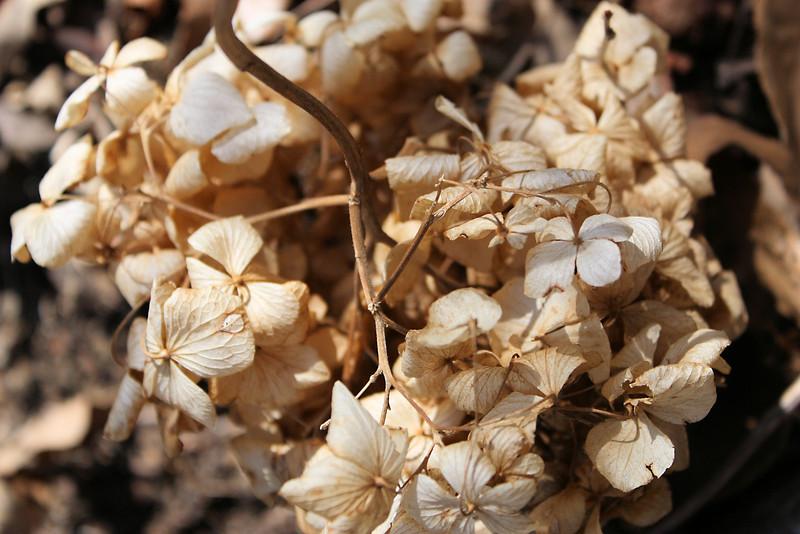 Dry flower plant found at Apsan mountain in Daegu, Korea.