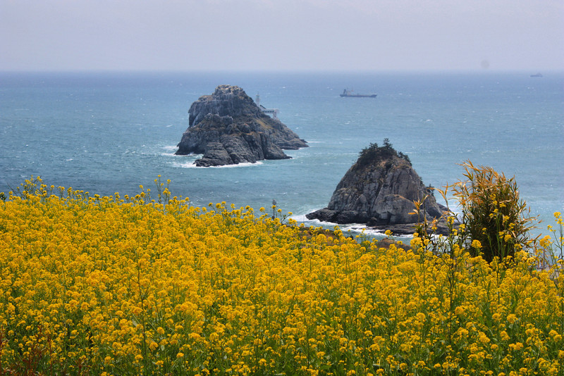 Sunrise Park along the Igidae Coastal Walk (cliff side walk) in Busan, Korea.