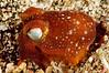 Squid_110415