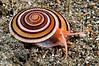Snail_110403