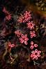 Tunicates_110407b