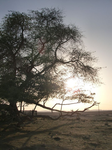 The Tree of Life in Bahrain.