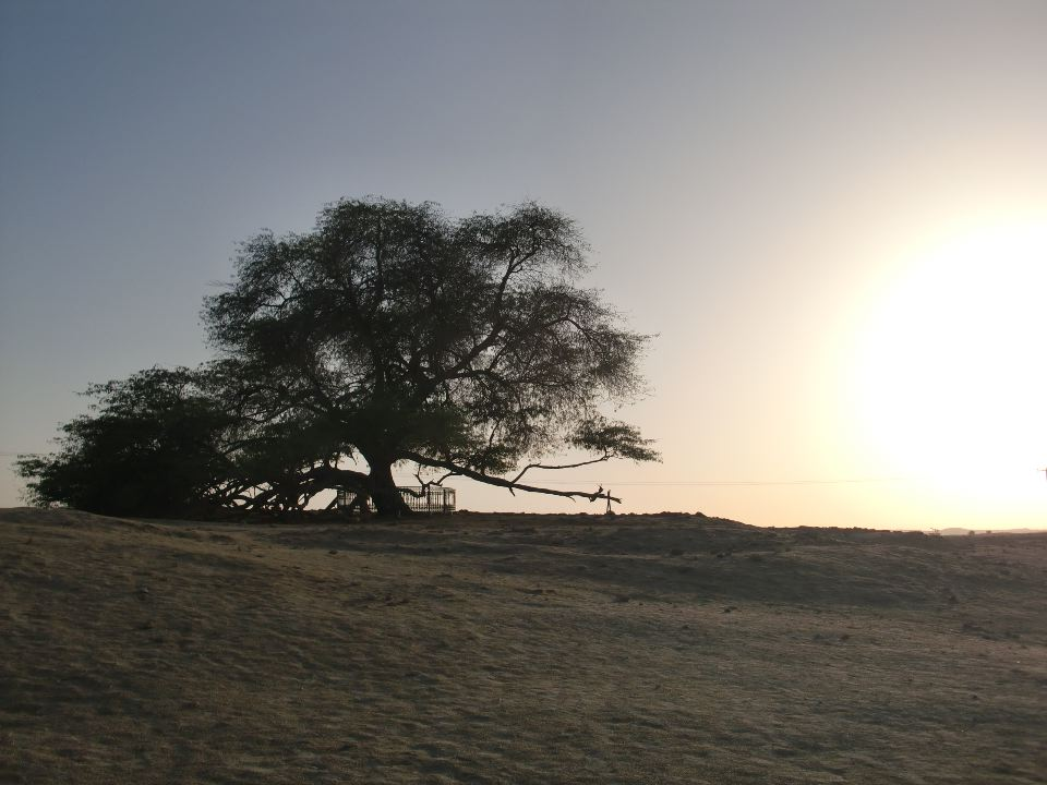 The Tree Of Life, Bahrain