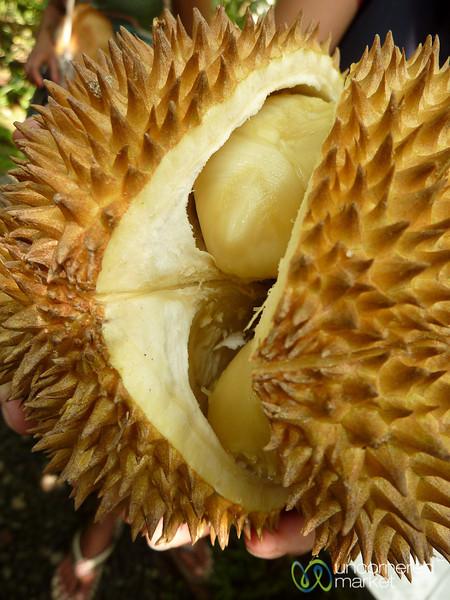 Durian Melon - Bali, Indonesia