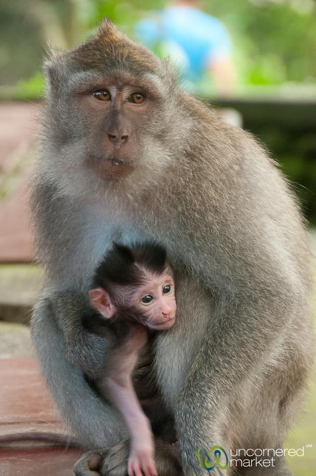 Monkey Mother and Young Child - Ubud, Bali