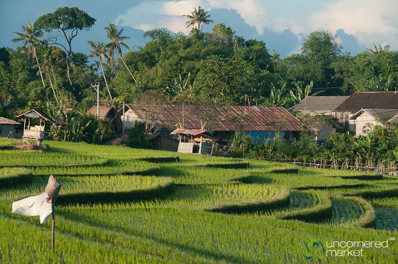 Layers of Terraced Rice Fields - Bali, Indonesia