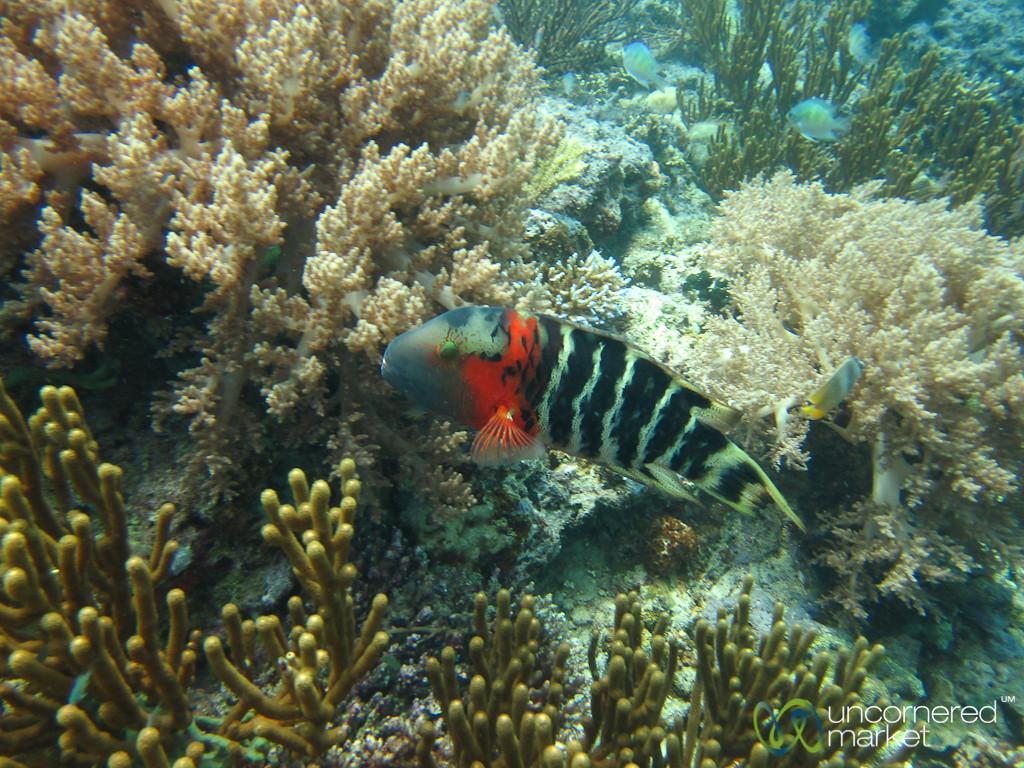 Scuba Diving at Menjangan Island - Bali, Indonesia
