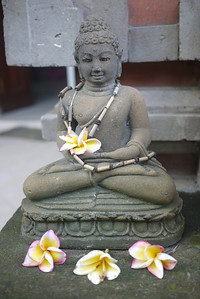 Frangipani Decorate God in Bali