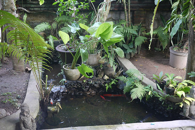 Small koi pond at my Bali guesthouse